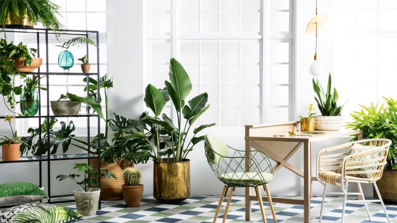 spring-botanicals-indoor-plants-greenery-expert-tips-sam-mcadam-cooper-joseph-gardner-danielle-selig-sept-15-20150915124112_q75,dx800y-u1r1g0,c--