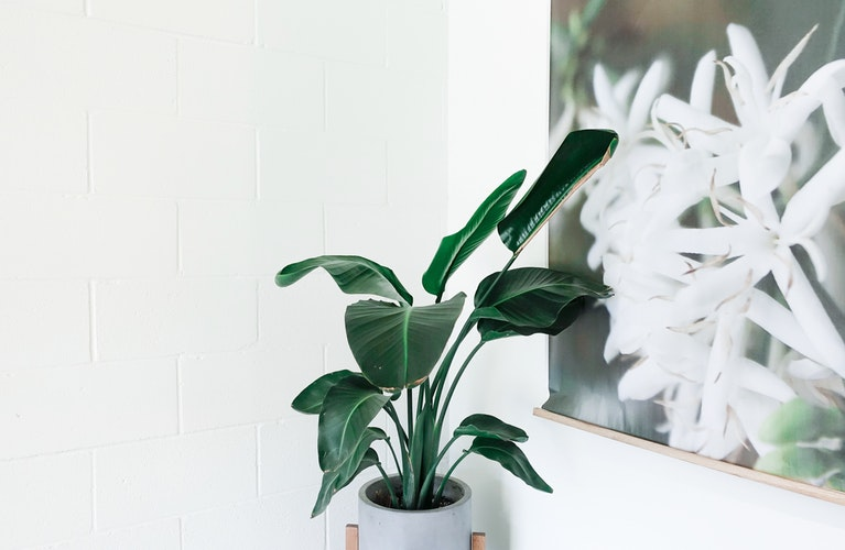 Easy Indoor Plants